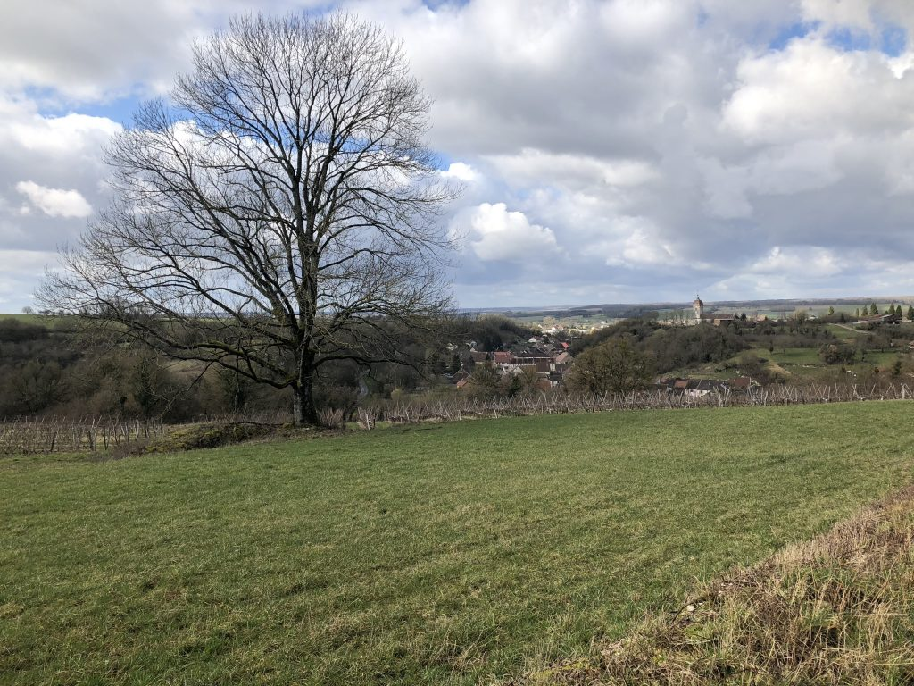 Baum vor Bucey-lès-Gy